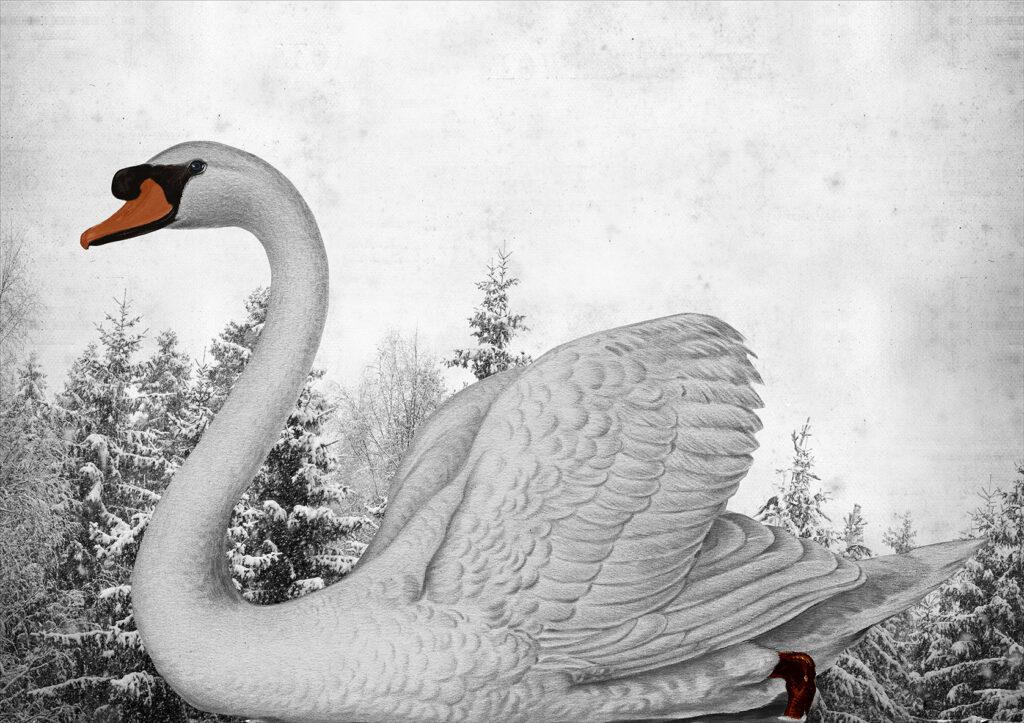 Vinst i Våga Se - Konst konstlotteri 2020. Konstnär Arnold Hagström, 'Svanen'. Pappersmått: 50x60 cm, bildmått: 26 x 38 cm. Upplaga 25